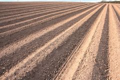 Ploughed Field Furrows. Ploughed furrows in farmers potato field Stock Image