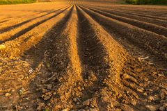 Ploughed Field, Ilminster. This ploughed field is on the south side of Ilminster, Somerset, England, United Kingdom Stock Photography