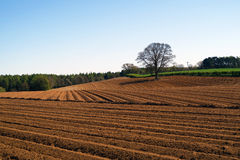 Ploughed field. Isolated tree stands of edge of ploughed farmers field Royalty Free Stock Photos