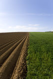 Ploughed field next to young wheat field Royalty Free Stock Photos