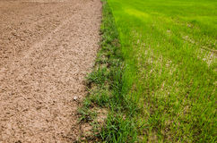 Ploughed field Royalty Free Stock Photography