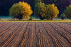 Ploughed field in the sunrise Royalty Free Stock Photo