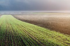 The ploughed field and young wheat field Royalty Free Stock Images