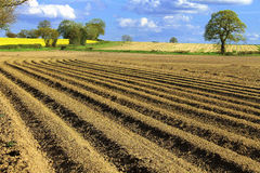 Ploughed fields Stock Photo