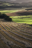 Ploughed Fields at Queens View in Scotland. Stock Photos