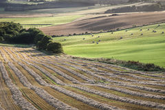 Ploughed Fields at Queens View in Scotland. Stock Image