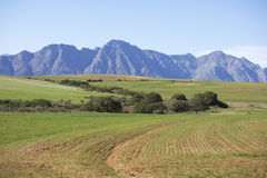 Ploughed fields in the Western Cape Royalty Free Stock Photography