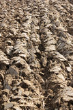 Ploughed Furrows Royalty Free Stock Images