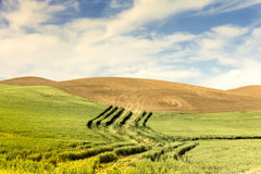Ploughed Hillsides and Wheat Royalty Free Stock Photo