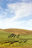 Ploughed Hillsides and Wheat Royalty Free Stock Images