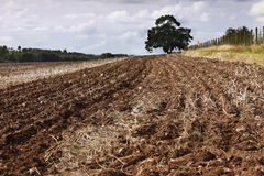 Ploughed / plowed field Royalty Free Stock Photo