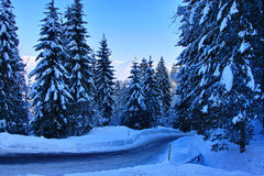 Plowed road through woods in snowy alpine scenery Royalty Free Stock Photo