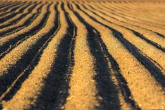 Ploughed soil Stock Images