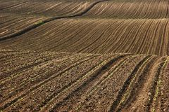 Ploughed soil. On the farm Royalty Free Stock Image