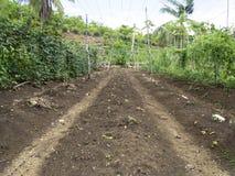 Ploughed farm land in Balamban, Cebu, Philippines. Ploughed tropical vegetable farm land in Balamban City, Cebu, Philippines Royalty Free Stock Images