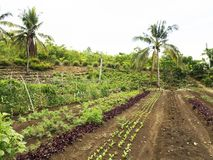 Ploughed farm land in Balamban, Cebu, Philippines. Ploughed tropical vegetable farm land in Balamban City, Cebu, Philippines Royalty Free Stock Image