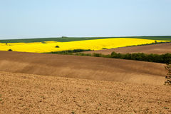 Ploughed up and cultivated fields with different crops Stock Photography