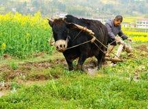 Ploughing Fotografia de Stock