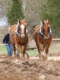 Ploughing dos cavalos Foto de Stock Royalty Free