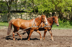 Ploughing the Field with Horses Royalty Free Stock Photos
