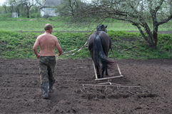 Ploughing the Field with Horses. And man Stock Photos