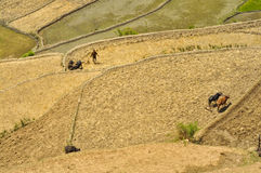 Ploughing fields in Nepal Stock Image