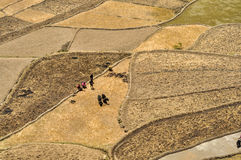 Ploughing fields in Nepal Royalty Free Stock Image