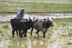 ploughing Het ploegen van het gebied met behulp van plough-share Stock Foto's