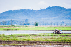 Ploughing machine at padi field Royalty Free Stock Photography