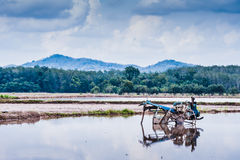 Ploughing machine at padi field Royalty Free Stock Image