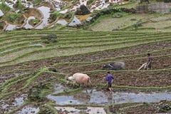 Ploughing no campo Foto de Stock