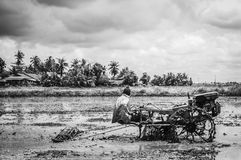 Ploughing padi field. View of a man on ploughing machine in the padi field in black and white royalty free stock photography