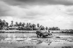 Ploughing padi field. View of a man on ploughing machine in the padi field in black and white stock image