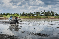 Ploughing padi field. A worker ploughing across the padi field with ploughing machine stock image