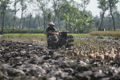 Ploughing rice paddies Royalty Free Stock Photo