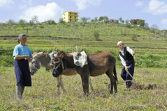 Ploughing in spring. A couple of farmers ploughing the earth in Albania Royalty Free Stock Image