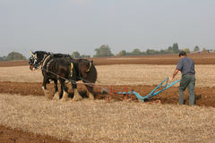 Ploughing team. Two shirehorses & ploughman Stock Images