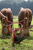 Ploughing team. Two brown horses with a traditional plough Royalty Free Stock Images