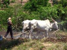 Ploughing tradicional Imagem de Stock Royalty Free