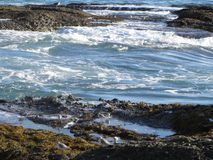 Plovers and Gull at Laguna Tide Pools, California Stock Images