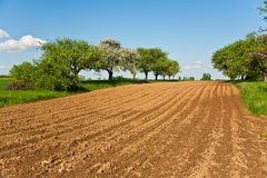 Plowed acres and trees with blue sky Stock Image