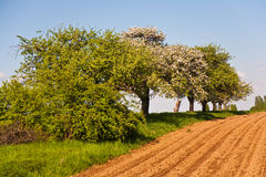 Plowed acres and trees with blue sky Royalty Free Stock Photos