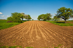 Plowed acres and trees with blue sky Stock Photos