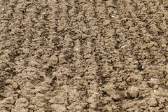 Plowed agricultural field Royalty Free Stock Photo