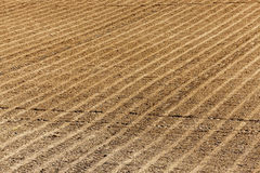 Plowed agricultural field. Agricultural field, ready for planting crops. Spring. close-up Royalty Free Stock Photo