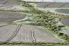 Plowed areas of farmed land, in the middle of a huge green patch of shrubs and weeds, diagonal green line. Plowed areas of farmed land, in the middle of a huge Stock Photography