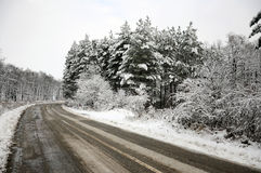 Plowed Curved Road Through Snowy Forest Royalty Free Stock Photos
