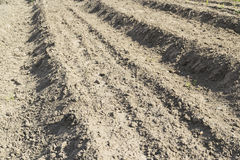 Plowed dry land Stock Photography