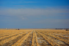Plowed Farm Corn Field in Winter. With Snow Traces Royalty Free Stock Photography