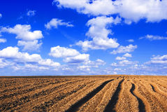 Plowed field. Viev on plowed field and blue sky Royalty Free Stock Images
